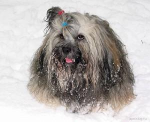 Razze canine estere