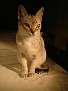 I gatti più piccoli nel mondo