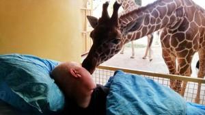 giraffa bacio uomo malato