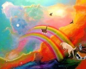 Il ponte dell arcobaleno - paradiso virtuale degli animali -