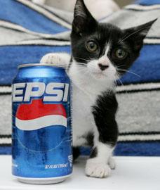 Mondo gatto cose buffe dal web  video divertenti sui gatti
