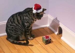 il gatto - È un opportunista